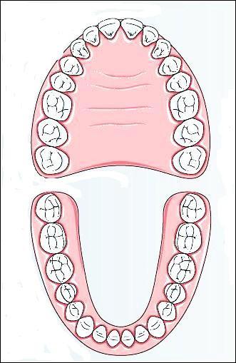 Quizz sur le brossage des dents - CM1 et CM2