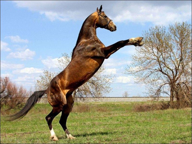 Que fait le cheval sur l'image ?