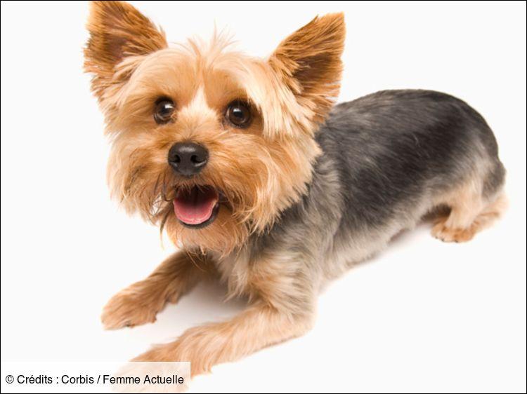 Identifiez la bonne race de ce chien.