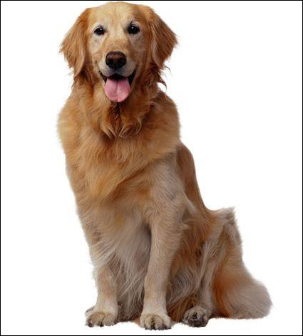 Comment s'appelle ce chien ?