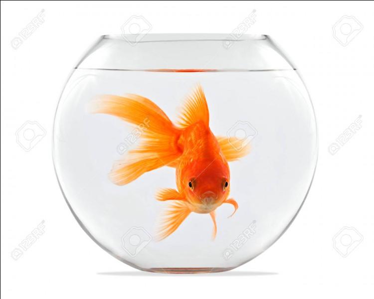 De quelle espèce est le poisson qui se trouve dans cet aquarium ?