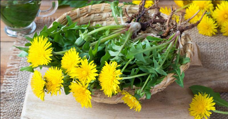 Feuilles, bourgeons, pétales, tout se mange, et vous pouvez faire du vin avec les fleurs !