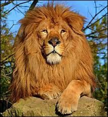 Dans quel dessin animé y a-t-il un lion qui est tué par son propre frère ?