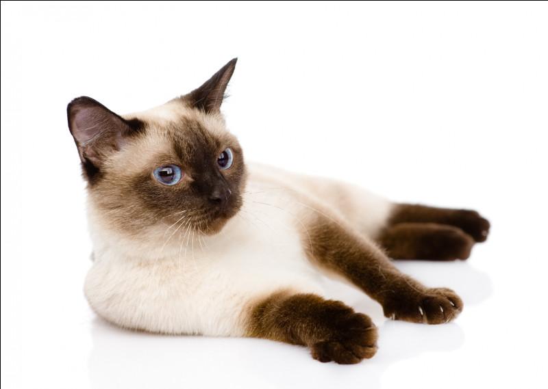 Un ocelot devient un chat si on lui donne du poisson.