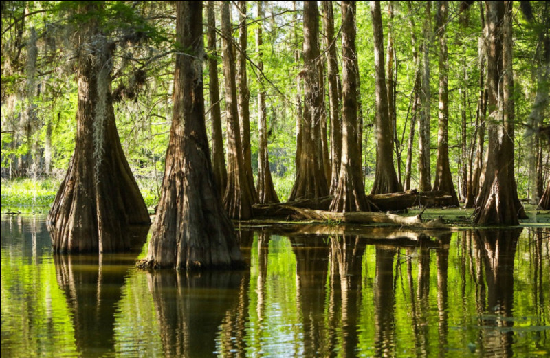 Quel est le nom de l'étendue d'eau formée par les anciens bras et méandres d'un grand fleuve ?