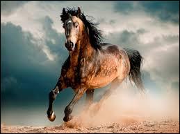 """Il chantait """"Mon cheval gris""""."""