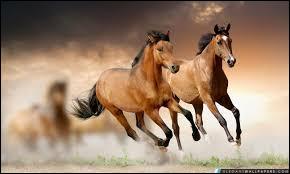 Grand rhinolophe fer à cheval est une espèce d'/de :
