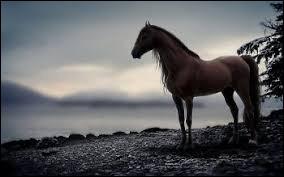 Le cheval en culture générale