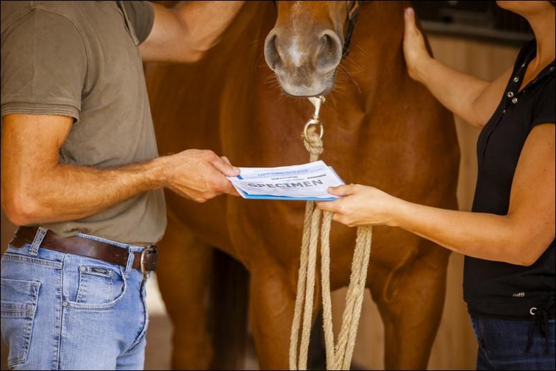 Pendant tout le test, imagine que tu es un cheval. Quelqu'un t'achète, quelle est ta réaction ?