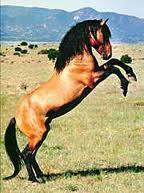 Es-tu fait(e) pour être un cheval ?