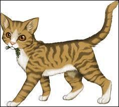 Le guérisseur de l'autre clan est malade, ils retiennent un apprenti et il demande de l'herbe à chat en échange, pour le libérer. Que fais-tu ?