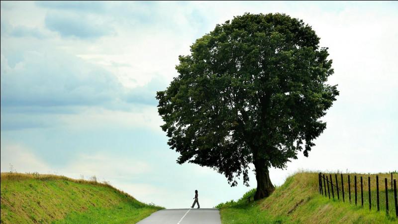 Quel arbre donne le coing ?