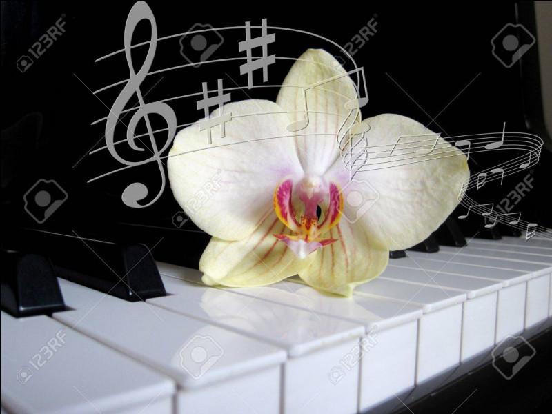 Combien un piano compte-t-il de touches noires ?
