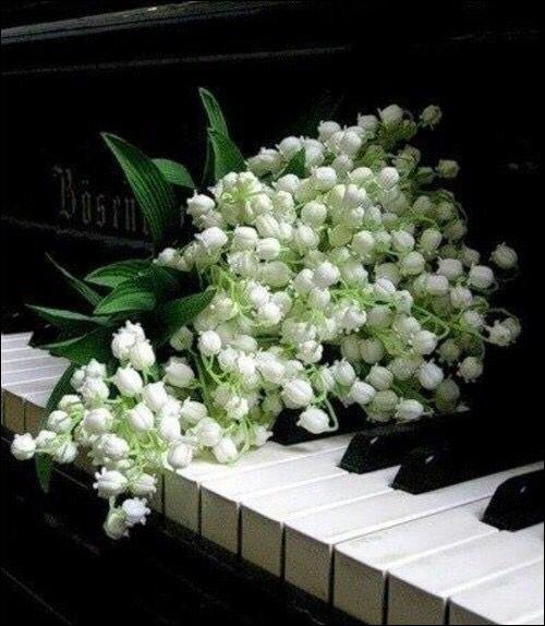Quel animal ne peut pas donner son nom à un piano ?