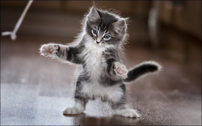 Les chats possèdent...
