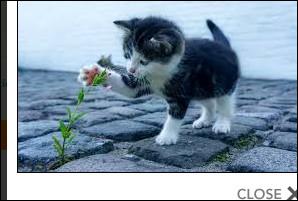 Il y a des chats :