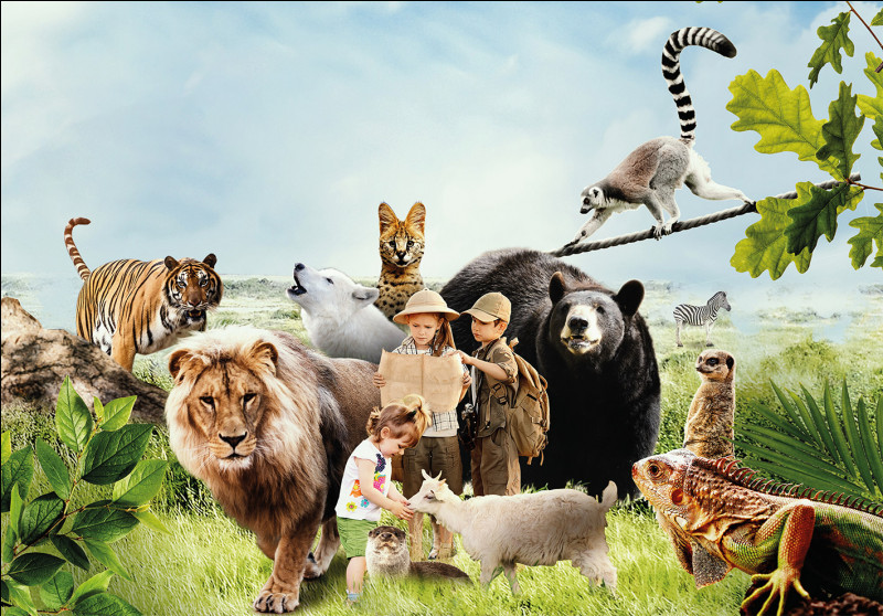 Quel animal aimerais-tu avoir ? (Fais comme si tu n'en avais pas si tu en as déjà.)