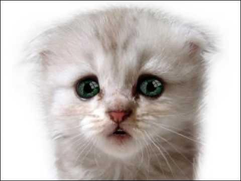 Imagine que tu vois un chaton ennemi dans un territoire ennemi et qu'il n'y a personne autour. Que fais-tu ?