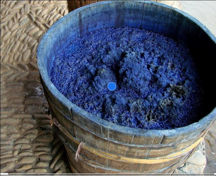 L'indigo, colorant plus fort que l'ancien pastel, a été ramené en Europe...