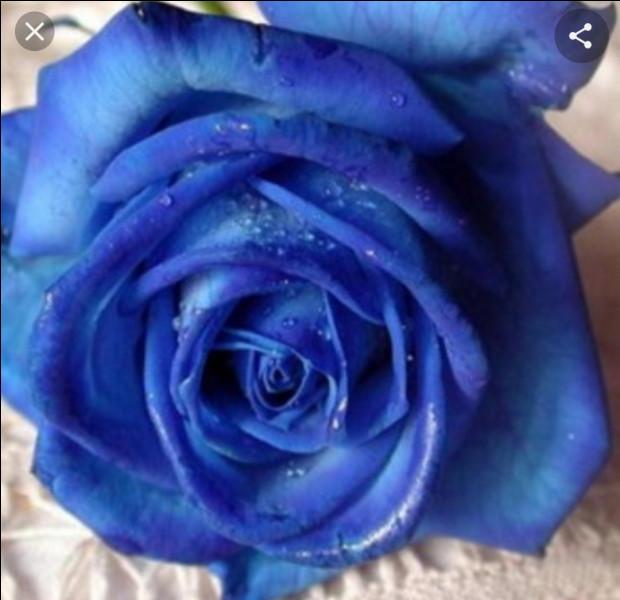 Selon un poème traditionnel anglais, la mariée doit porter quelque chose de bleu car ce dernier symbolise...