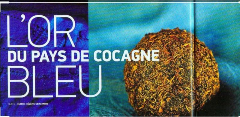 Quelle ville française s'est enrichie au XVIéme siècle grâce à la culture du pastel, un véritable or bleu !