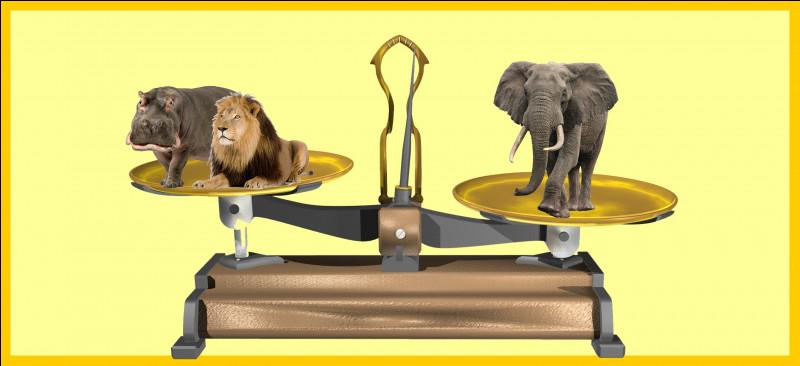 Un éléphant mâle de la savane africaine est plus lourd qu'un hippopotame mâle et un lion. Êtes-vous d'accord avec la balance ?