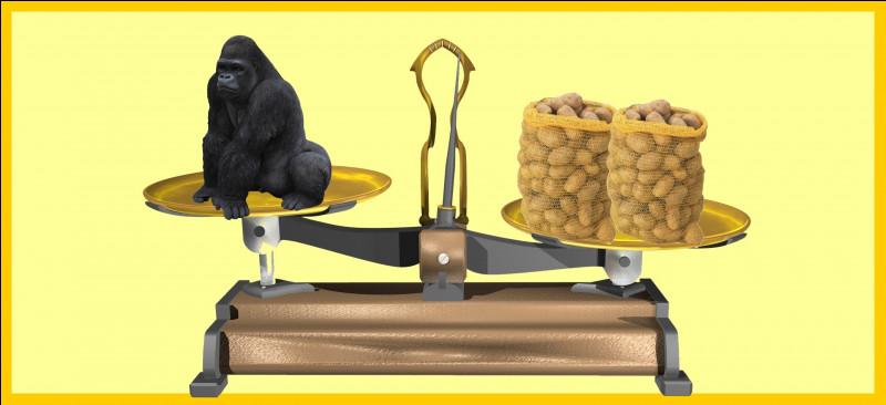 Un gorille des montagnes est plus léger que deux sacs de 25 kg de patates. Êtes-vous d'accord avec la balance ?