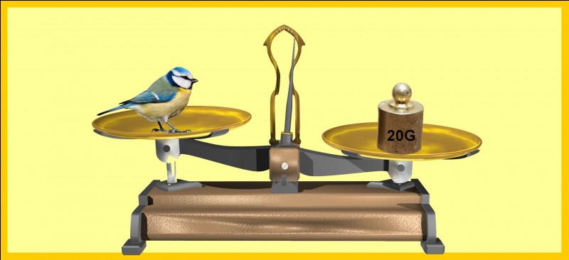 Une mésange bleue adulte est plus légère qu'un poids de 20 grammes. Êtes-vous d'accord avec la balance ?