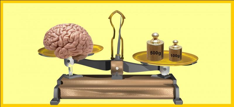 Le cerveau d'un homme adulte pèse moins de 600 grammes. Êtes-vous d'accord avec la balance ?