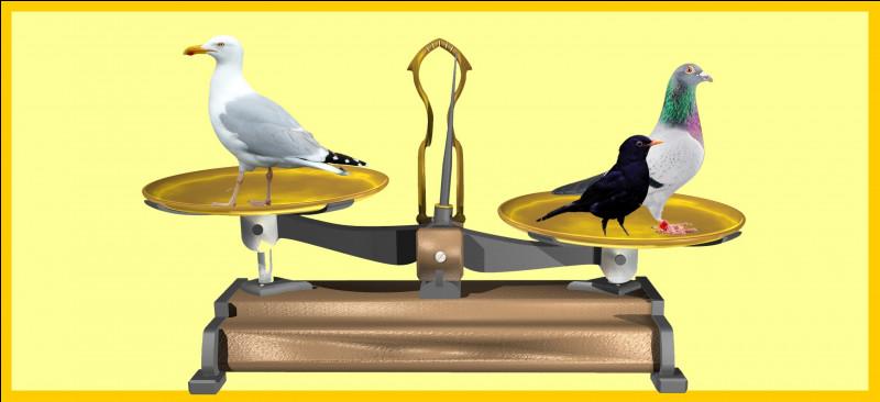 Le pigeon biset et le merle noir sont plus lourd que le goéland marin. Êtes-vous d'accord avec la balance ?