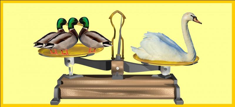 Le cygne est plus lourd que trois canards colvert. Êtes-vous d'accord avec la balance ?