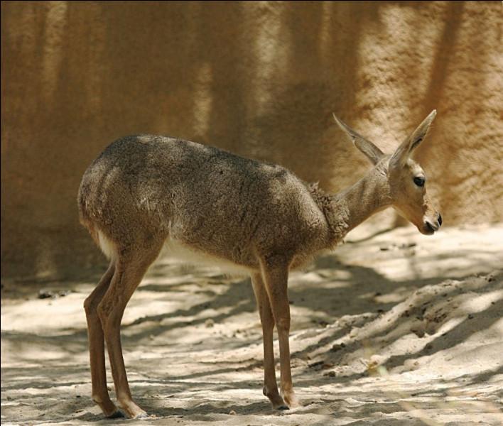 Quelle sous-espèce d'antilopes (les plus rapides au monde) a donné son nom a une marque de baskets américaine créée en 1895 ?