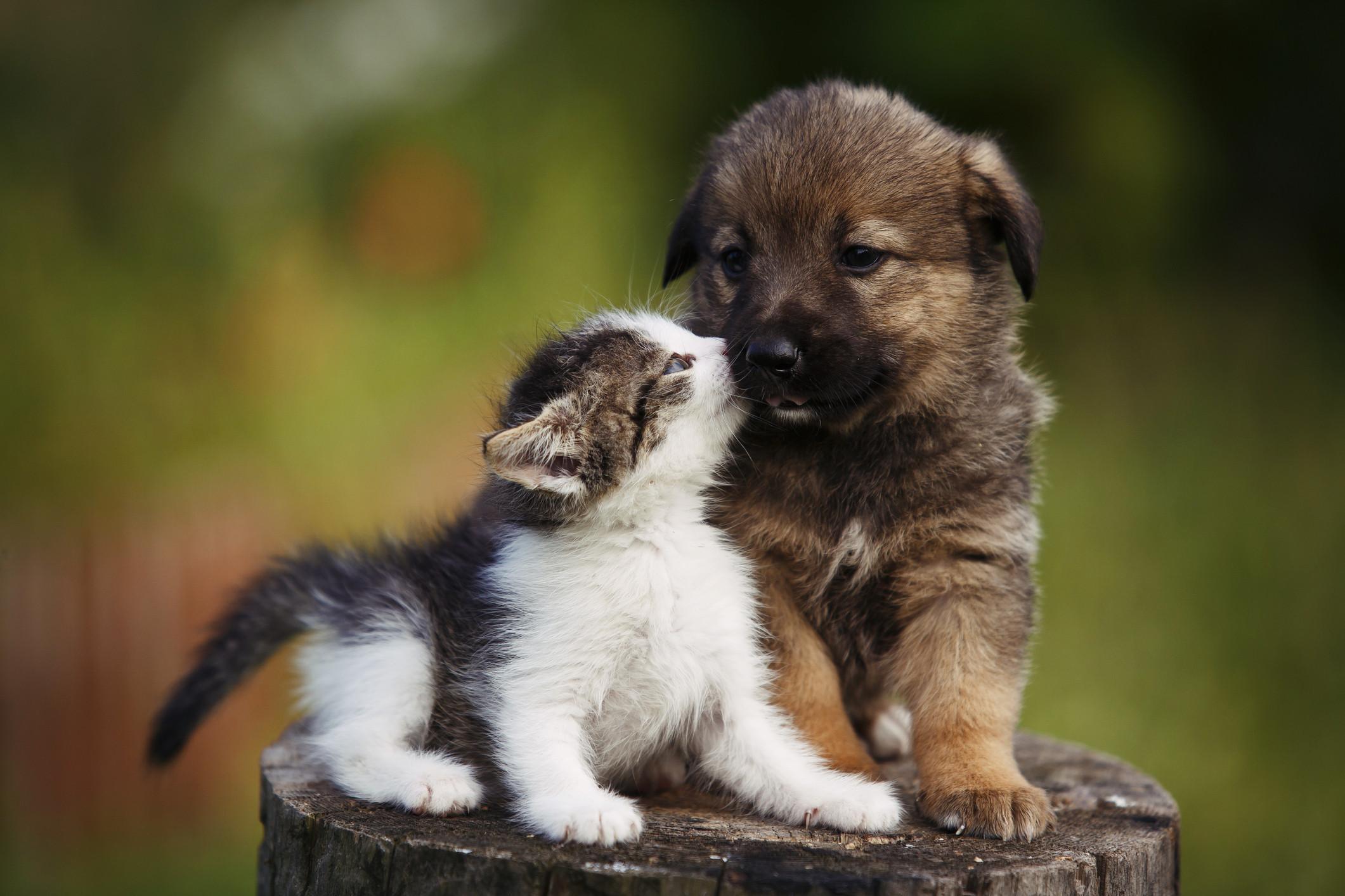 Les races de chiens peu connues