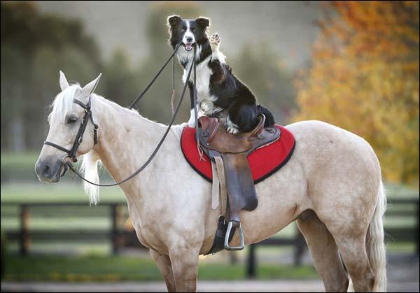 Observez ce duo. Que fait le cheval sur l'image ?