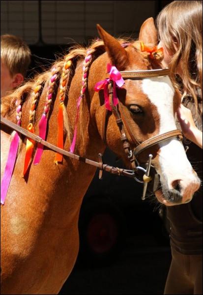 Observez ce cheval. Quelles sont ces choses qui ornent sa tête ?