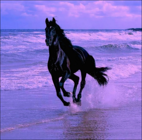 Observez ce cheval. Il galope dans/sur...