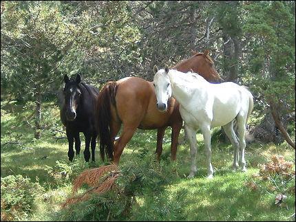 Observez ces chevaux. Combien y en a-t-il sur l'image ?