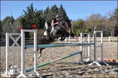 Observez ce cheval. Calculez la hauteur de son obstacle.