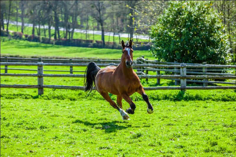 Observez attentivement ce cheval et son entourage. Comment est-il ?
