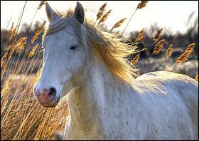 Observez bien ce cheval et son entourage. Il se trouve dans un champ de...
