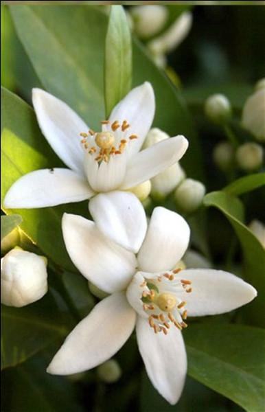 Bien connues dans la pâtisserie et la parfumerie, ce sont des fleurs...