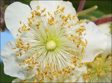Quel fruit vous donnera cette splendide fleur ?
