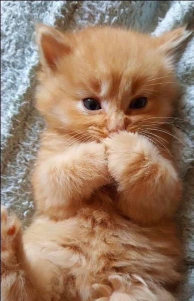 Les chats domestiques peuvent détecter une souris avec leurs moustaches.