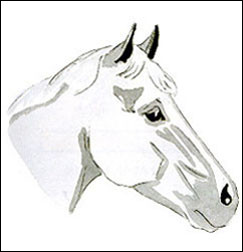 Quelle est la marque de tête de ce cheval ?