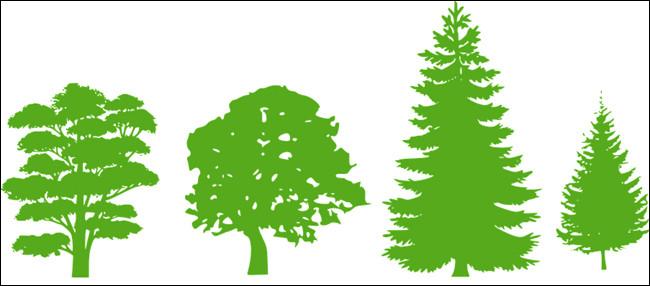 Quel arbre préfères-tu ?