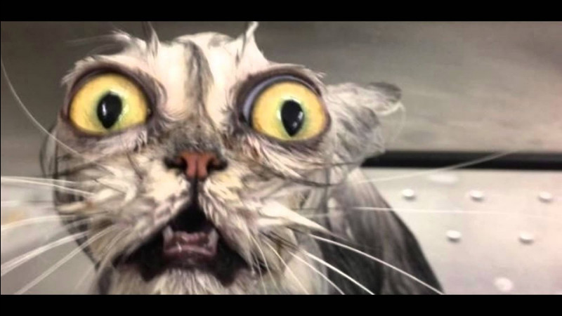 Tu surprends un chat d'un autre clan sur ton territoire et il te vole du gibier. Que fais-tu ?