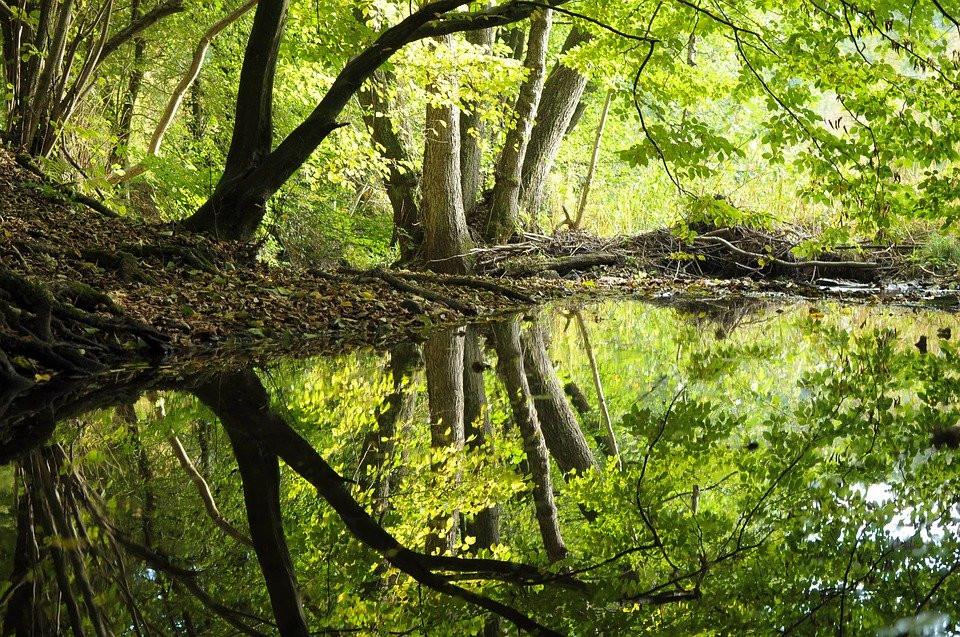Nature : forêt, environnement, animaux, plantes