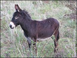 L'âne blatère !