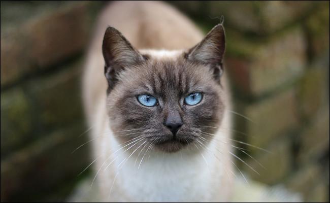 L'humain dispose de plusieurs cris pour exprimer sa voix, chanter, parler, murmurer, crier, gémir. Certains animaux aussi !Je pense que le chat feule !