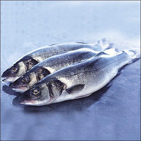 Comment s'appellent ces poissons ?